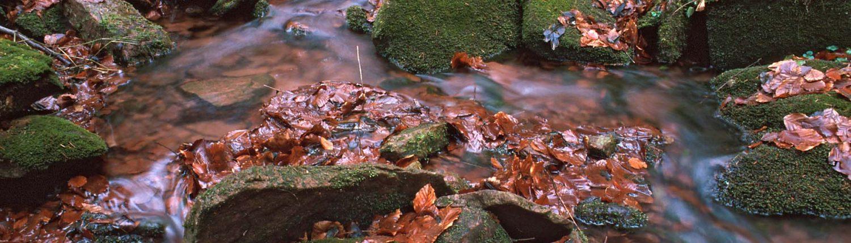 Panta rhei - alles ist im Fluss. Manchmal auch nur im Kleinen.